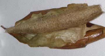 Peeled luffa