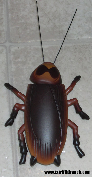 archy the cockroach