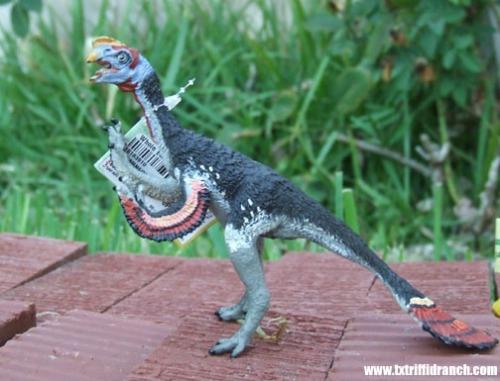 Safari Oviraptor