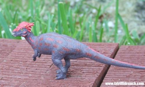Battat Pachycephalosaurus