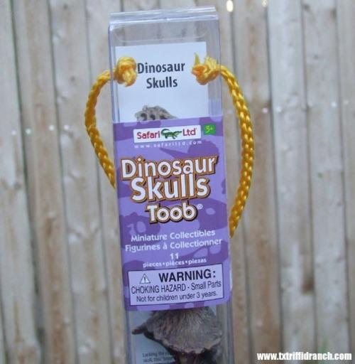 Safari Dinosaur Skulls Toob
