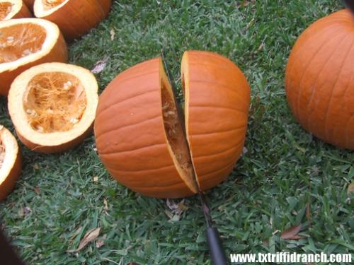 Cutting pumpkins