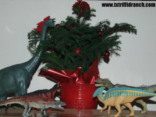 Norfolk Island pine with dinosaurs