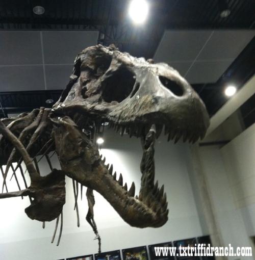 Tyrannosaurus (worst view)