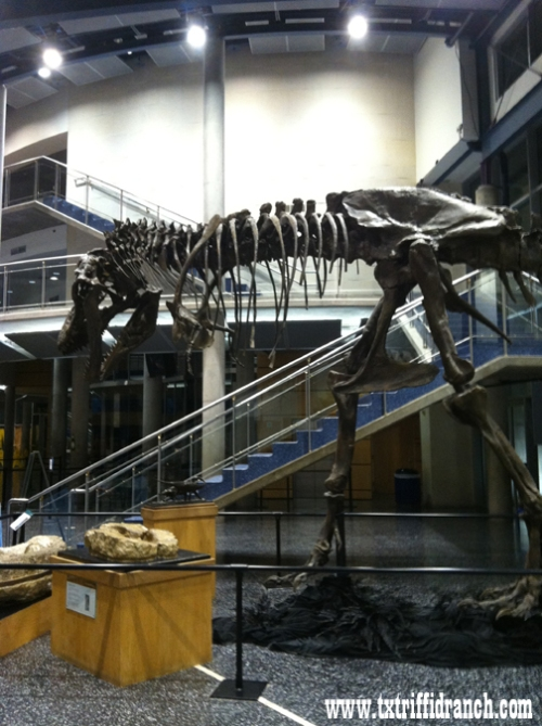Tyrannosaurus back view