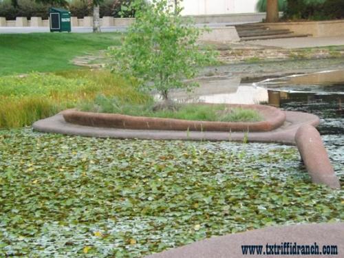 Lagoon sculpture