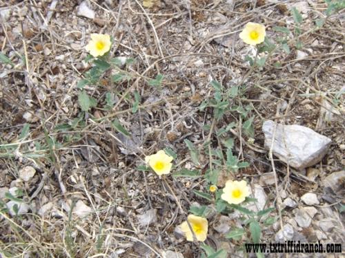 Unknown wildflower 2