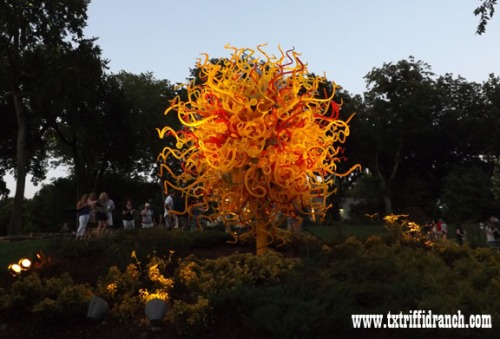 Chihuly 11