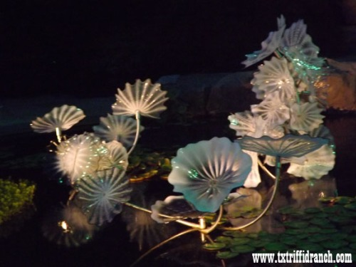 Chihuly 19
