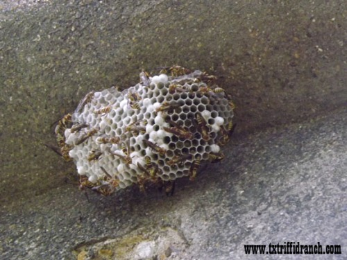 Paper wasp nest on pylon