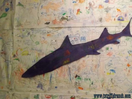 Shark mural and cutout
