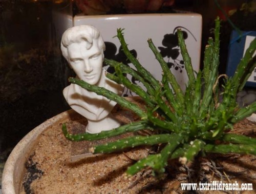 Elvis among the medusa head