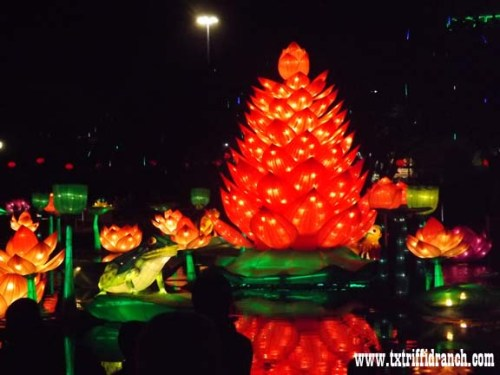 Chinese Lantern Festival - Lotus and Frogs