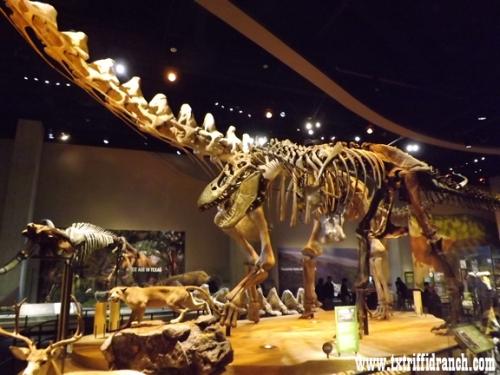 Tyrannosaurus and Alamosaurus
