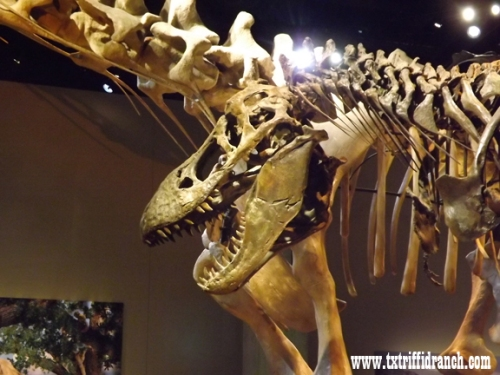 Tyrannosaurus closeup