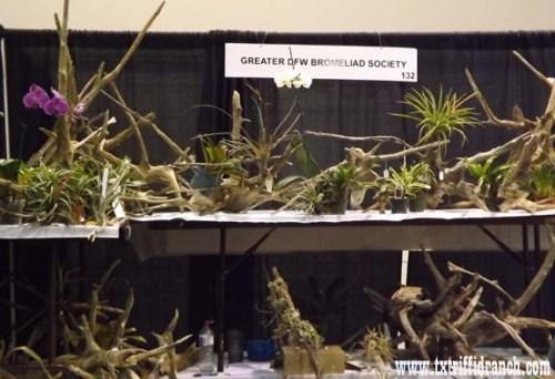 Bromeliad Society