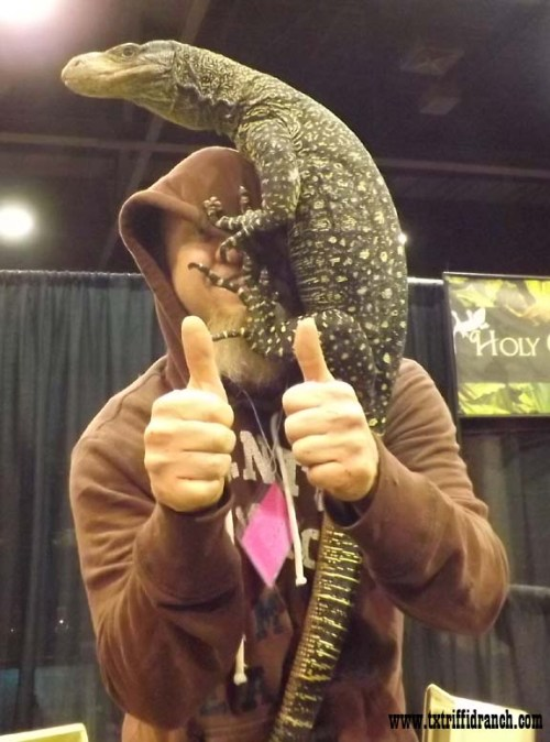 Crocodile monitor