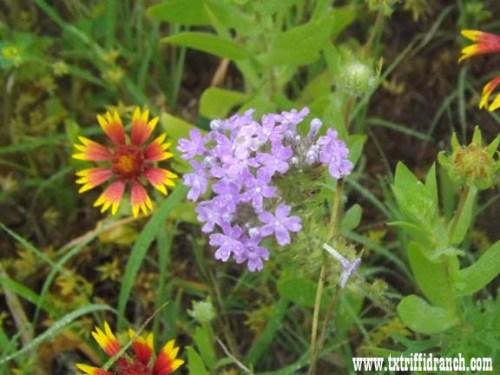 wildflowers_51713_12
