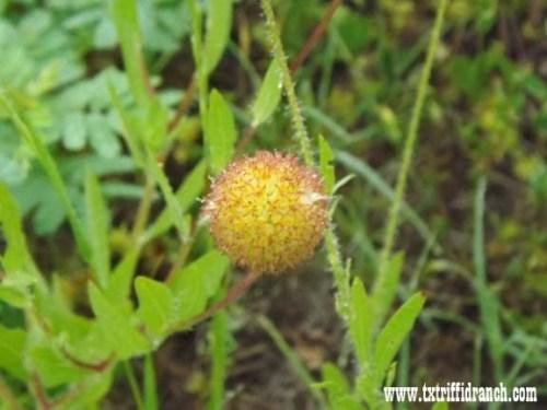 wildflowers_51713_14