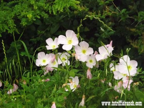 wildflowers_51713_5