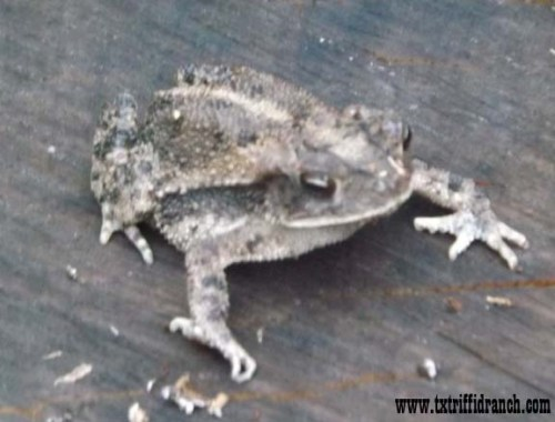 toad_2_61413