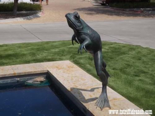 FWBG Frog