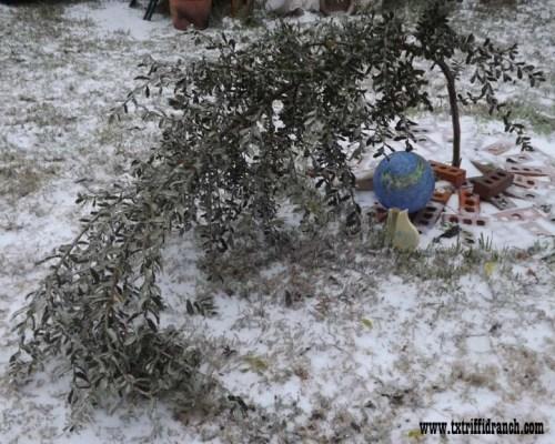 Triffid Ranch Charlie Brown Christmas tree