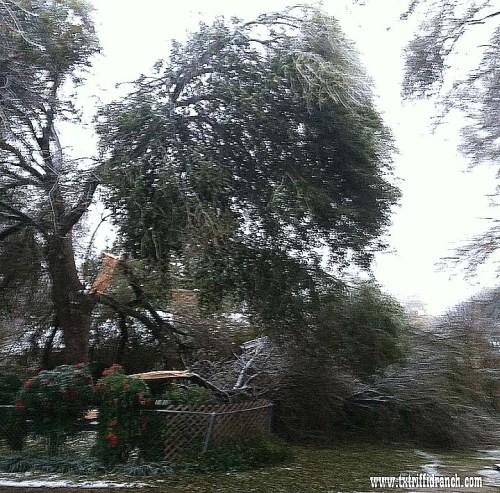Oak Icepocalypse
