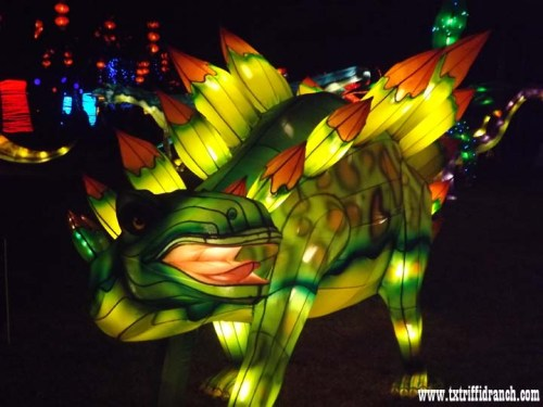 Chinese Lantern Festival - Dinosaurs
