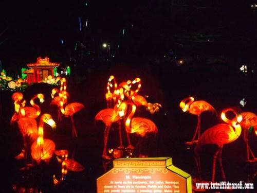 Chinese Lantern Festival - Flamingos