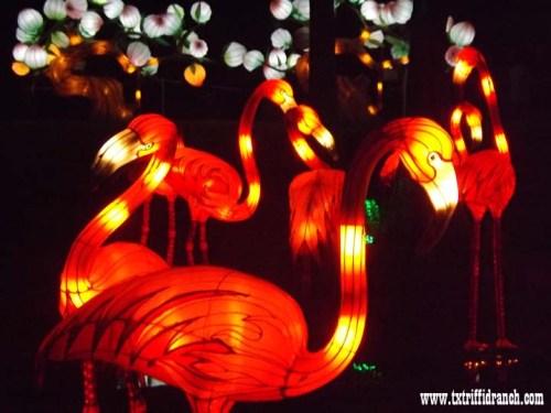 clf_flamingo_1092014_2
