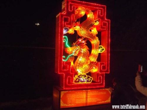 Chinese Lantern Festival - Dragon