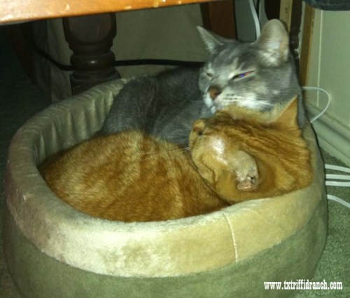 Sharing the Cat Bed
