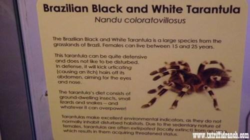 Brazilian tarantula sign