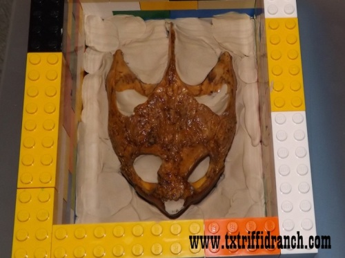 Snapping turtle skull being cast